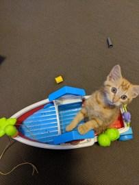 Daisy going sailing